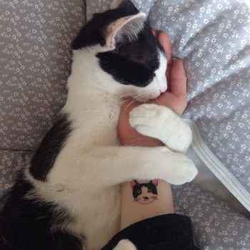 This Minimalist Tattoo Will Prove You Love Your Cat