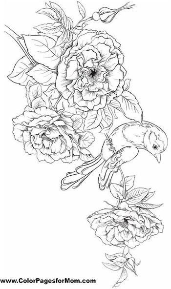 Bird Coloring Page 28