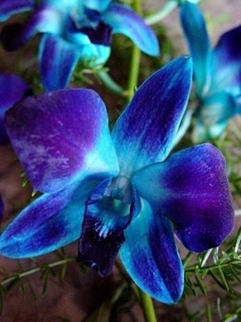 Flower Homes: Rare or Odd Flowers