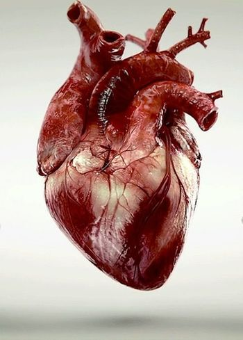 The human heart is truly a thing