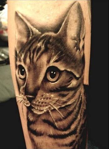 Taturday! ENORMOUS Cat Tattoos!