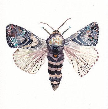 Moth - Archival Print
