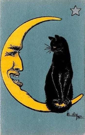 Le #CHAT et la lune par Edy | #cat and #moon