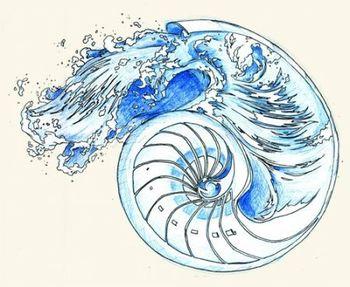 nautilus shell tattoo - Google Search