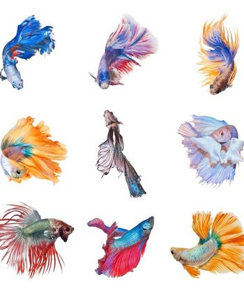 10 Cool Facts About Betta Fish - mom.me