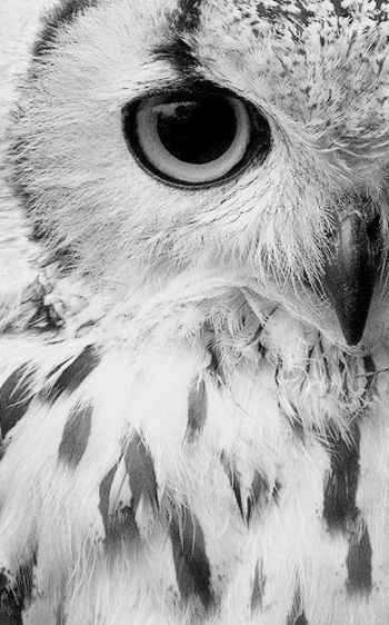 Owl. ... Lets protect our world! Help saving the planet so we can all live to continue seeing these a