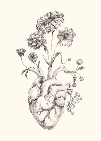 "IMPROVED 5x7"" PRINT of original drawing ""Blooming Heart"" on NEW ivory paper- graphite, art, anatomy,"