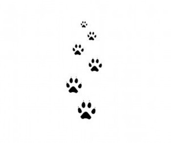 Free designs - Cat paw tracks tattoo wallpaper