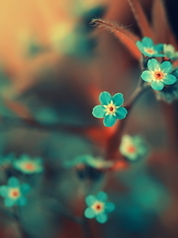 turquoise flowers - would go perfect with our new bedroom design... print like this above my dressing