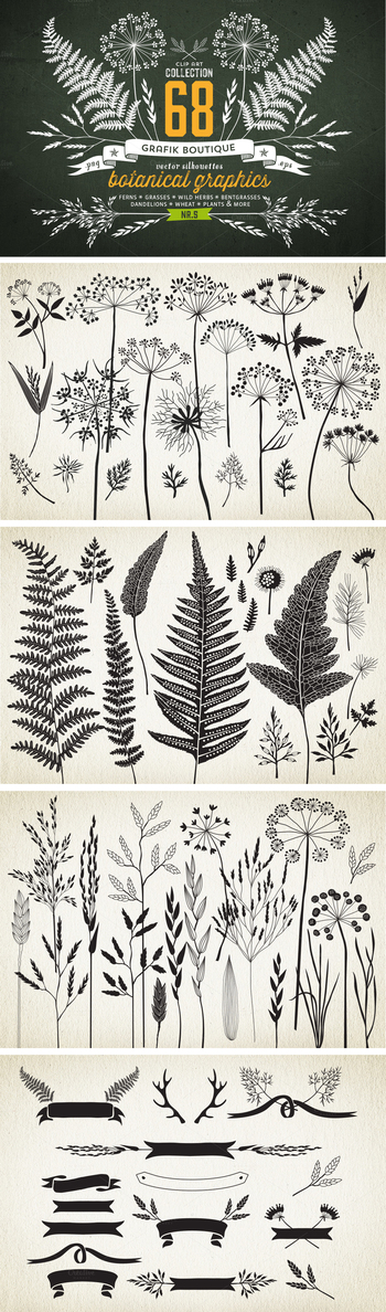 Botanical element illustrations... *IDEA* try printing to give a sense of surroundings? or layering i
