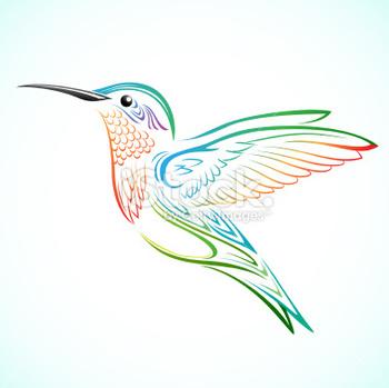 Colorful Humming bird