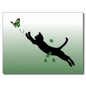 The Cat & The Butterfly