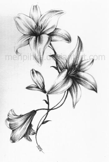 Lily Tattoo 2 by meripihka on deviantART