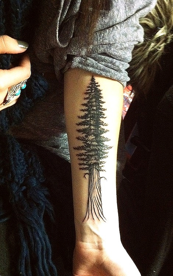 I want this tree with pnw in the roots for when I move away from my home...