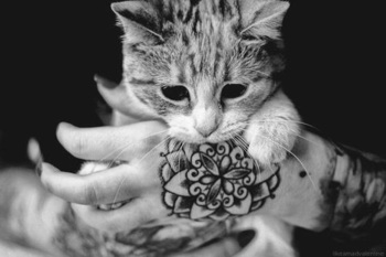 i'm sure they're trying to show off the tattoo, but all i see is an adorable cat :)