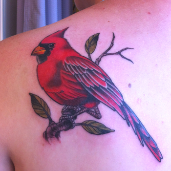 My cardinal tattoo done by David Carbonell at Phat Joe's Tattoos in Miami, FL (Oct 2011)