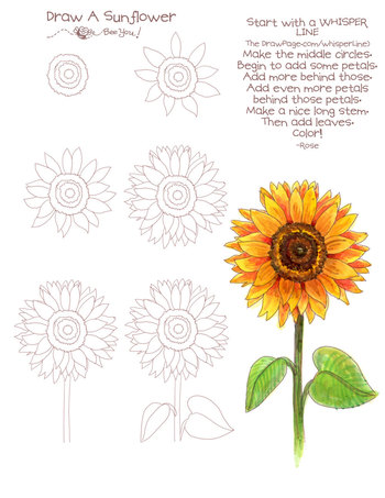 Drawing a sunflower