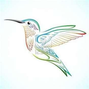hummingbird drawings - Yahoo Image Search Results
