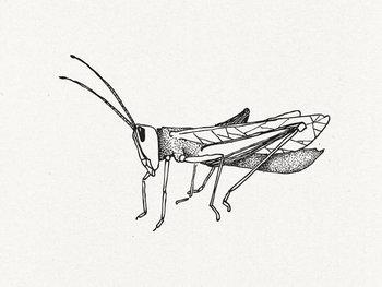 Grasshopper Temporary Tattoo by deKrantenkapper on Etsy, $5.59