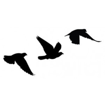 Flying birds, the sign of freedom. This will happen to represent all that I went through to become an individual
