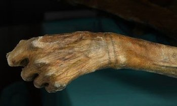 This 5,300-Year-Old Body Has The World's Oldest Known Tattoos