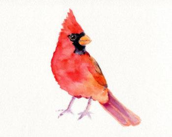 Flying cardinal tattoo - Google Search