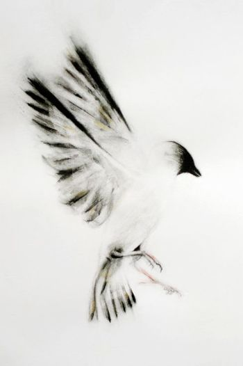 Bird - Giclee Print, 2014 by Kellas Campbell