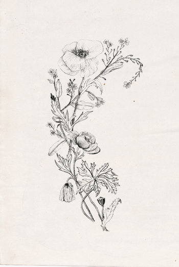 Wildflowers with poppy. Nadezda Fava tattoo design. Instant download in my etsy shop: https://www.ets