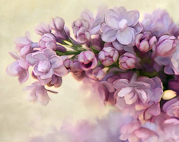 Photograph, Floral Nature Photograhy, Lilac Photo, Lilac Print, Flower Print, Flower Photo on Etsy, $