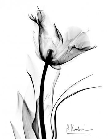 Tulip by Albert Koetsier - Susan Spiritus Gallery