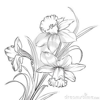 Images For > Narcissus Flower Drawing Tattoo