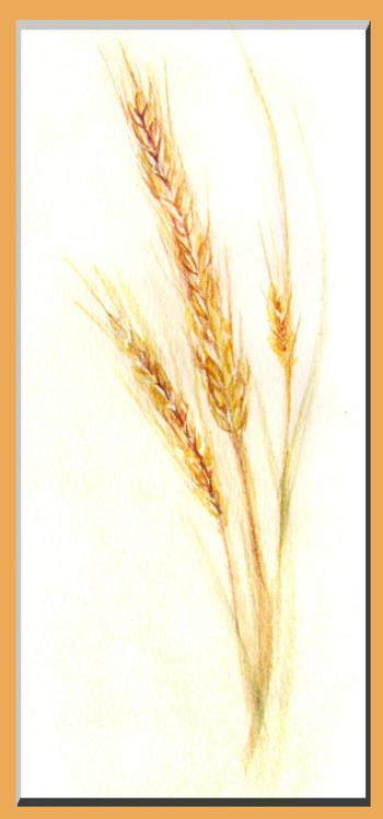 Google Image Result for http://soupsandchili.com/Li_food_art_paintings/Wheat2-food-art-painting.jpg