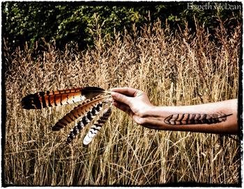 My kookaburra feather tattoo #feathers #tattoo #female tattoo