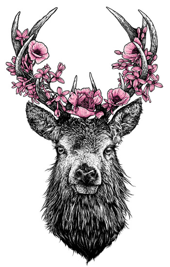 drawings of a stag - Google Search
