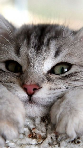 Cats became part of our lives 7,000 to 8,000 years ago, after people had already begun to live in per