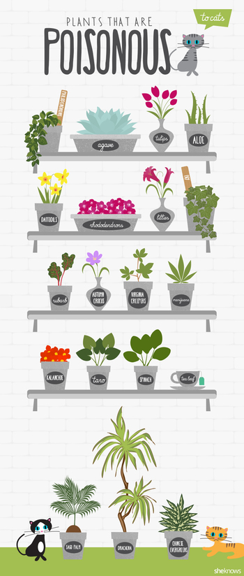 If you have cats in your home, be sure to avoid having these plants around