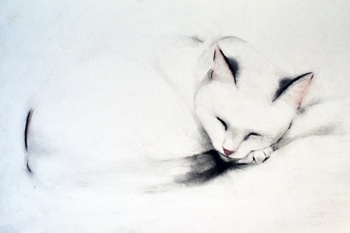 Sleeping Cat 2, 2014 by Kellas Campbell